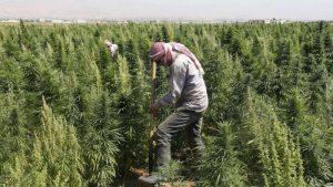 """تفاصيل زراعة """"قسد"""" للمخدرات وترويجها (صور)"""