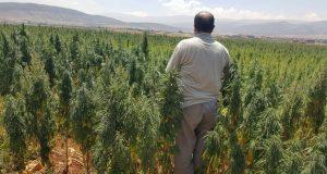 """أين تزرع ميليشيا """"قسد"""" المخدرات في سوريا؟"""