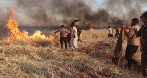 غلال تل أبيض: الحرق أو النهب